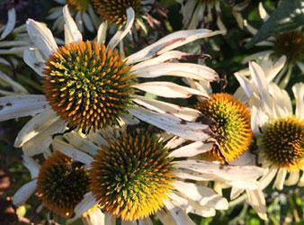 No-Go-Geschenk Nr. 2: Hässliche Blumen