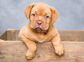 No-Go-Geschenk Nr. 9: Ein Haustier